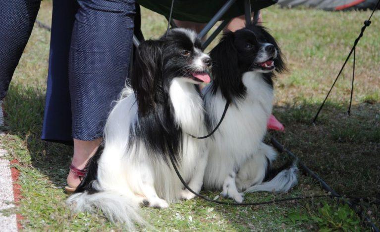 Spotkali się miłośnicy psów
