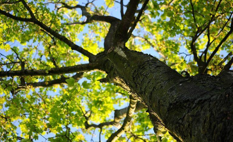Jesienna akcja sadzenia drzew