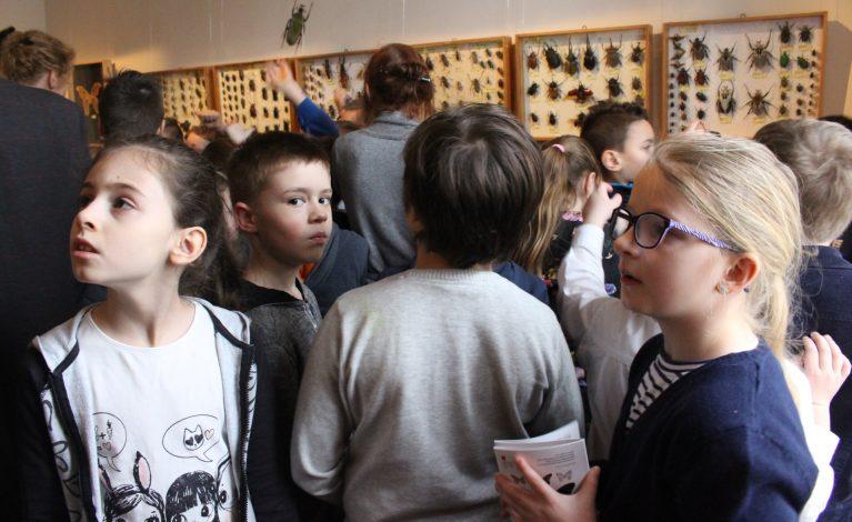 Tysiące owadów w Muzeum Częstochowskim