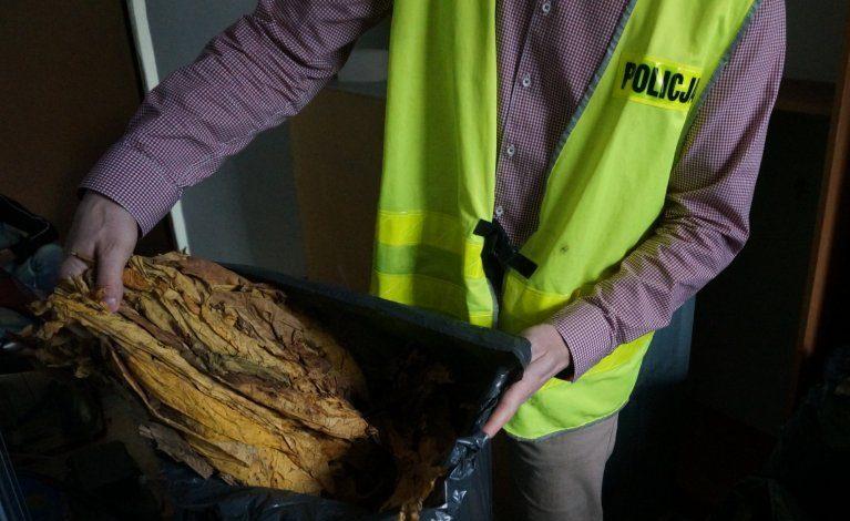 Przejęli blisko 100 kilogramów tytoniu