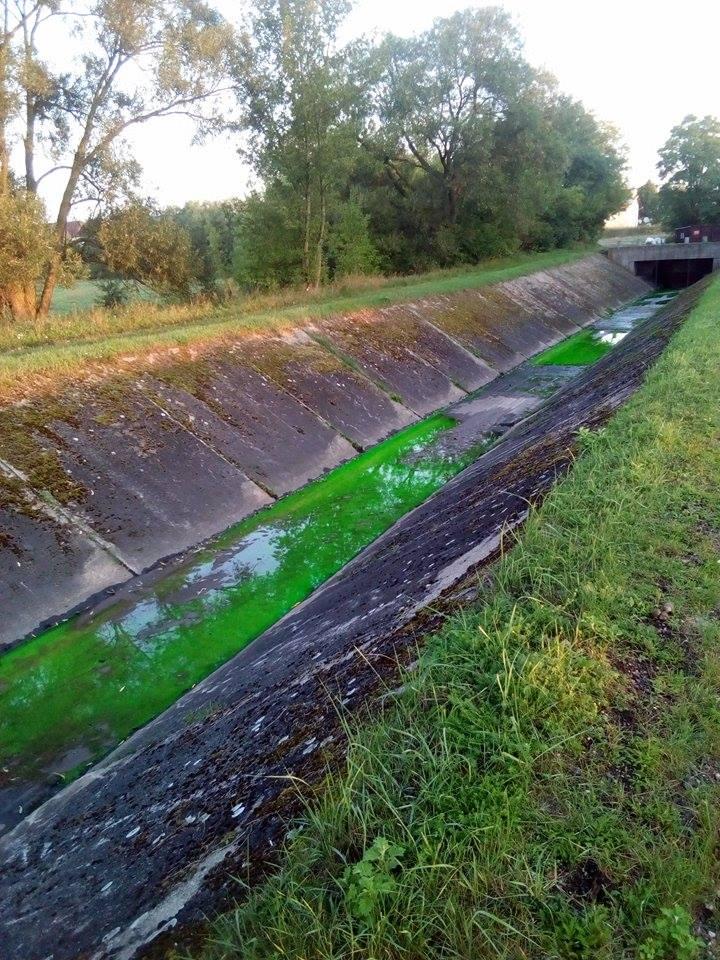 Dlaczego woda zabarwiła się na zielono?