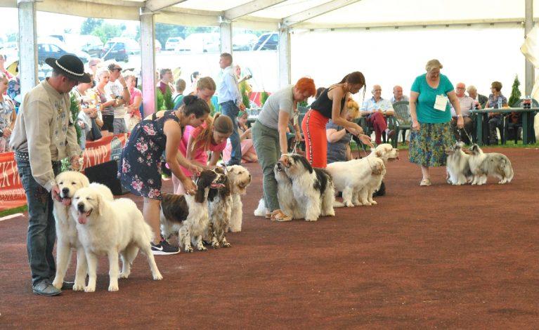 Blisko trzy tysiące psich piękności w Konopiskach