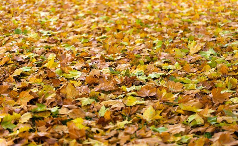 Bezpłatny odbiór liści