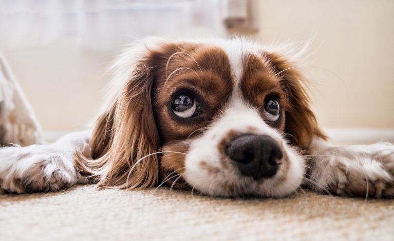 Resort sięgnie do kieszeni właścicieli zwierząt?
