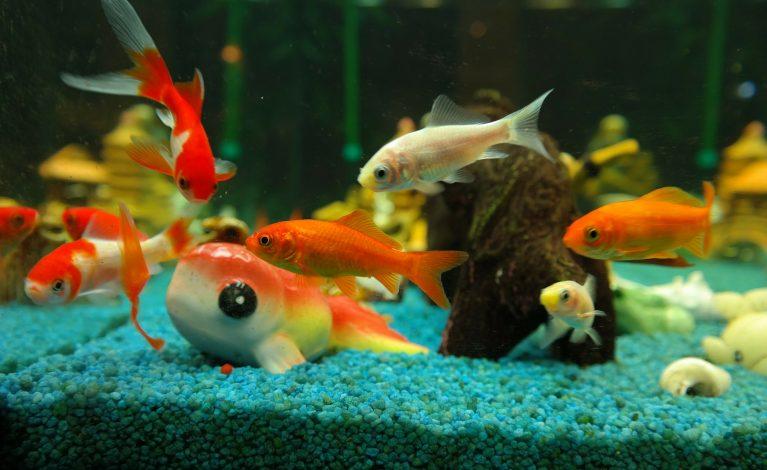 Ryby i nie tylko…
