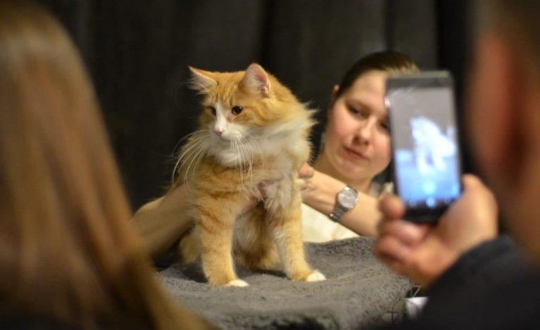 Najpiękniejsze koty świata w Częstochowie