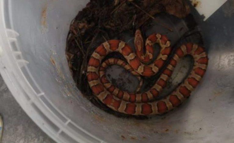 Na swojej posesji znalazła… węża