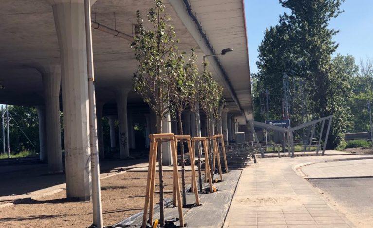 Posadzili drzewa pod wiaduktem