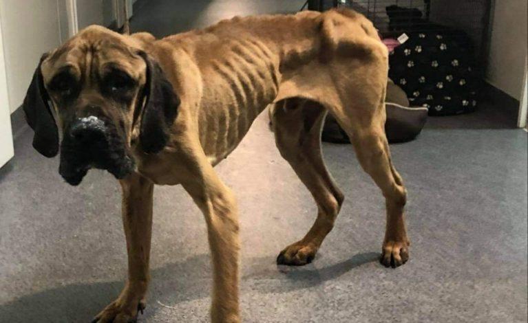 Zostawiła psy bez jedzenia i picia. Są w agonalnym stanie