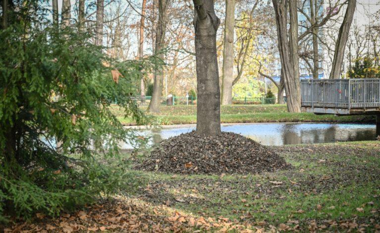 Jeżo-strefy w miejskich parkach