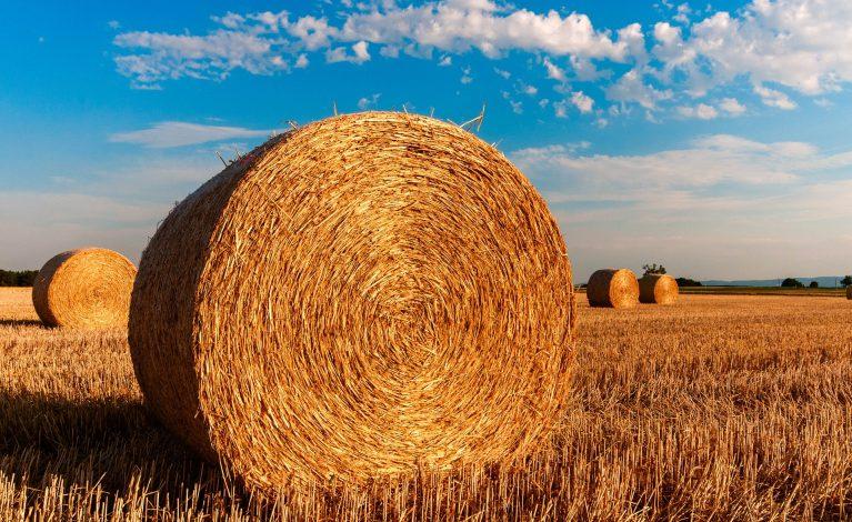 Dobre notowania ARiMR wśród rolników