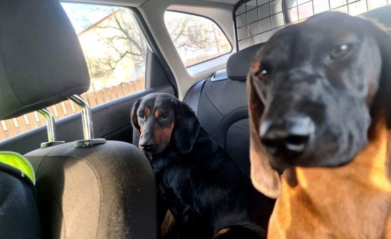 O psach, które jeździły… radiowozem