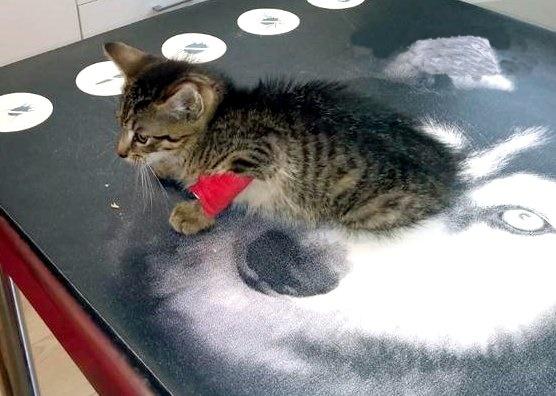 Potrącony kociak potrzebuje pomocy