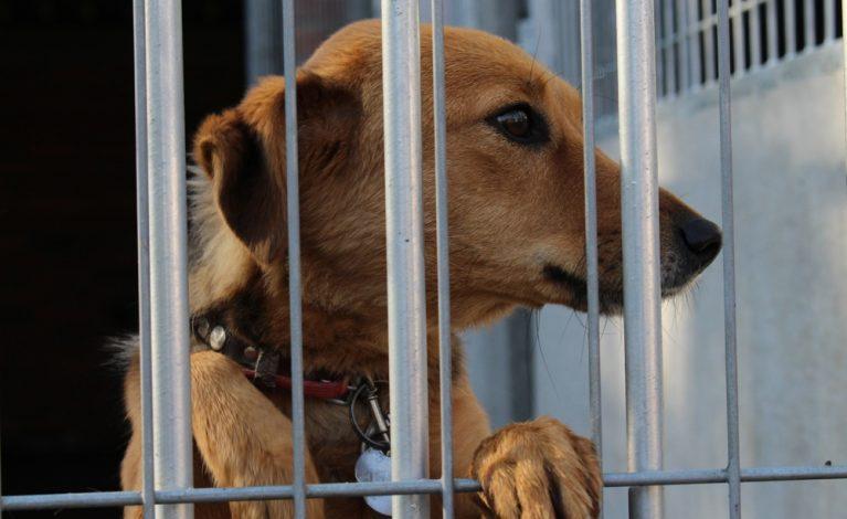 Adoptuj psiaka, nie bądź obojętny na los zwierzaka
