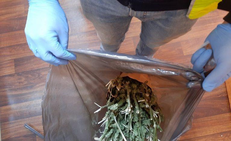 Zabezpieczyli kilogramy marihuany i amfetaminy